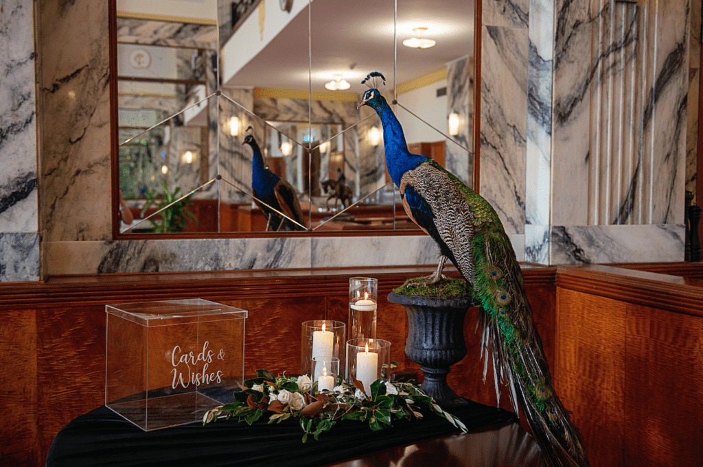 """Peacock """"Reg"""" Taxidermied)"""